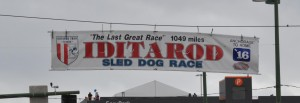 Iditarod Start Line